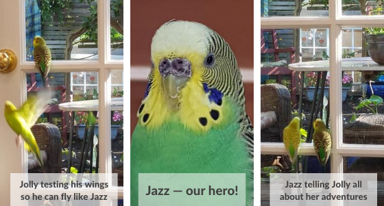 Jolly and Jazzy the perfect pair of budgies